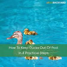 How To Scare Birds Away From Patio by How To Keep Ducks Out Of Pool In 4 Practical Steps Oct 2017