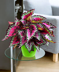 Best Inside Plants Great Way To Add Some Color And Energy To A Room But Also Very