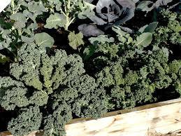 top ten winter vegetables for your home garden u2014 portland edible