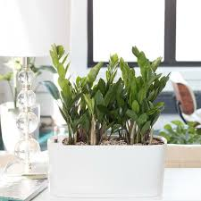 beautiful house plants easy care indoor plants the zamie brings happiness to the house