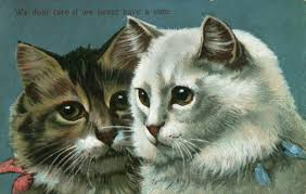 Mean Cat Memes - mean cat memes existed in the 1900s and they were pretty bizarre