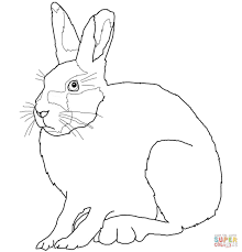 arctic hare coloring page free printable coloring pages