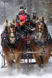 42 best christmas horses images on pinterest horses christmas
