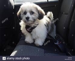 hypoallergenic pet stock photos u0026 hypoallergenic pet stock images