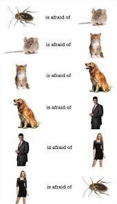 Afraid Meme - december meme lol 2013 who is afraid of who map
