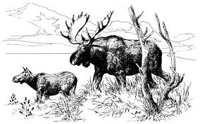 real animal coloring pages free moose coloring pages moose coloring pages in animals coloring