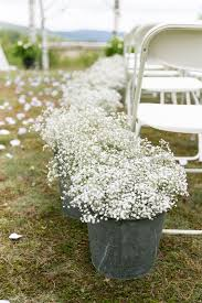 bulk baby s breath for how does baby s breath last everafterguide