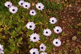 of plants and garden centres on mallorca living in rural mallorca