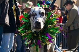 mardi gras dog mardi gras in mckinney tx is going to the dogs get mckinney