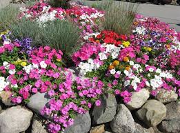 planning and planting a fall flower garden orlando sentinel