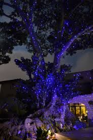 Christmas Laser Projector Lights by 90 Best Bliss Lights Sreejaya Images On Pinterest