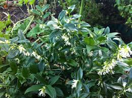 271 best winter garden u0026 shrubs images on pinterest winter