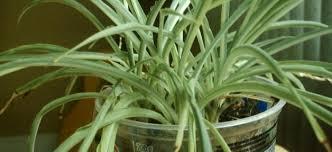 une plante dans une chambre idée reçue avoir une plante dans sa chambre perturbe le sommeil