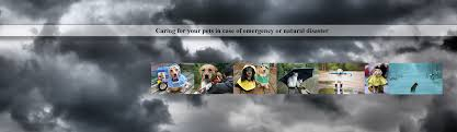 animal shelter princeton nj