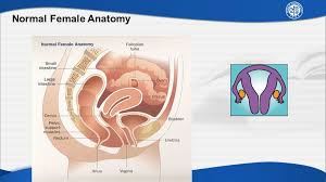 Cul De Sac Anatomy Female Chapter 37 Anatomic Disorders Of The Female Reproductive System