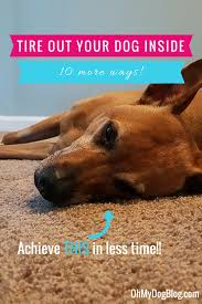 10 more ways to tire out your dog indoors oh my dog