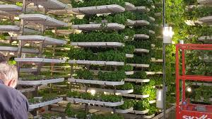 Benefits Of Urban Gardening - benefits of hydroponic gardening for your grow room