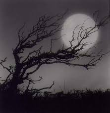 moon and tree stringer print canvas