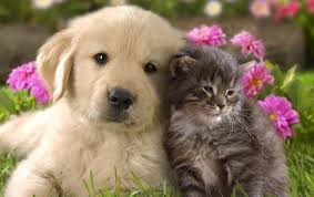 Best Friend Wallpapers by Dog Friend Wallpapers Gzsihai Com