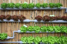 kitchen garden ideas vertical vegetable garden ideas