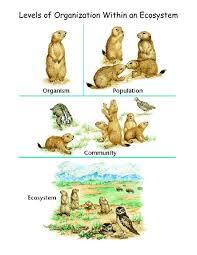 herbivore carnivore omnivore lesson plans u0026 worksheets