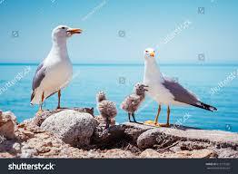 birds nest on atlantic ocean picturesque stock photo 615175202