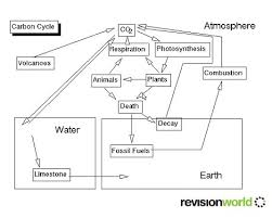 carbon the carbon cycle and nitrogen cycle gcse revision