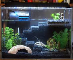 so i made a new tank for my pet crayfish thermidor what do you