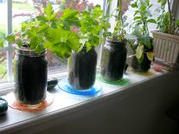 alluring and sweet indoor garden solution ideas offer bay window