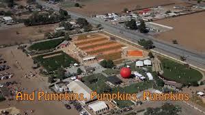 morgan hill halloween city morgan hill pumpkin park at uesugi farms