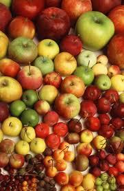 varieties wsu tree fruit washington state university