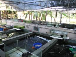 kerala greens farm