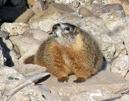happy groundhog day bob u0027s nature blog