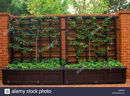 articles with modern metal wall trellis tag metal wall trellis