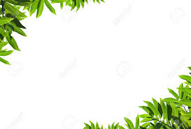 White Background Natural Green Leaf Frame On White Background Stock Photo Picture