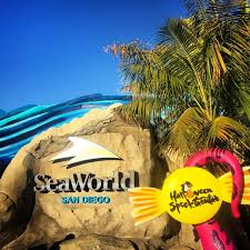 seaworld halloween seaworld how to sea it all in one day san diego family
