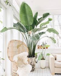 plants indoors 5 indoor plants you need in your life