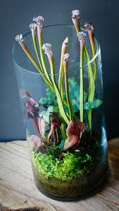 terrarium table decorating terrarium ideas air plant terrarium ideas table
