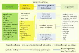 Energy Flow In Plants Concept Map Plant Biofactories Philosophical Transactions Of The Royal