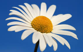 interpretation of a dream in which you saw daisy
