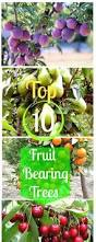 Planting Fruit Trees In Backyard Más De 25 Ideas Increíbles Sobre Fruit Bearing Trees En Pinterest