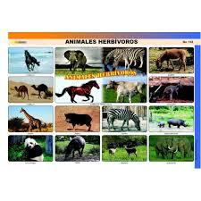 imagenes de animales carnivoros para imprimir 5 laminas de animales carnivoros imagui
