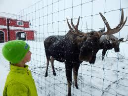 Alaska wild animals images Alaska wildlife conservation center archives ak on the go jpg