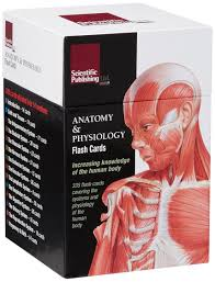 anatomy ross and wilson images human anatomy learning