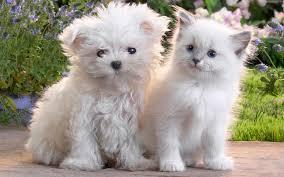 desktop cute images of cats download
