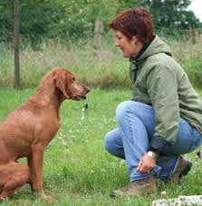 how to train dog to stop barking the secret of successful dog training totally dog training