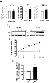 functional coupling of chloride u2013proton exchanger clc 5 to gastric
