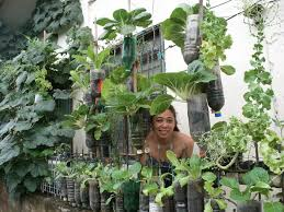vertical vegetable garden write teens