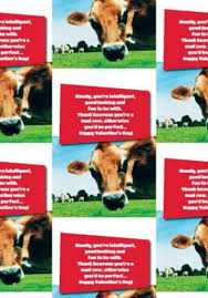 cow wrapping paper jersey cow photographic s wrapping paper