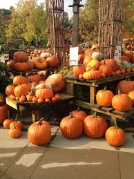 our garden blog u2014 b b barns garden center u0026 landscape services